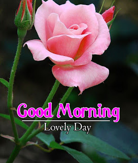 New Good Morning 4k Full HD Images Download For Daily%2B19