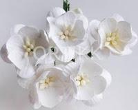 http://ortikk.com/pl/c/kwiaty/36