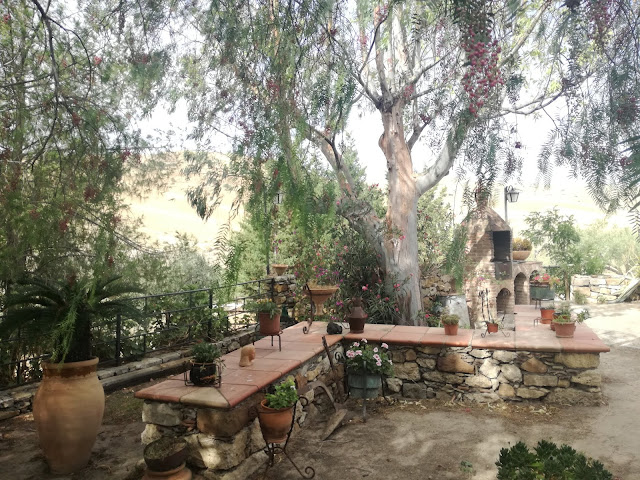 murek w ogrodzie, maa architektura ogrodowa, eukaliptus