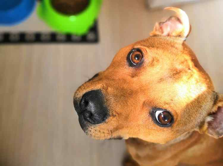 What to Do if Your Dog is Always Hungry