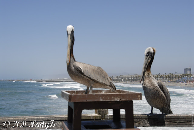 Two Pelicans: LadyD Books
