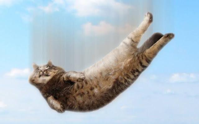 Kucing jatuh