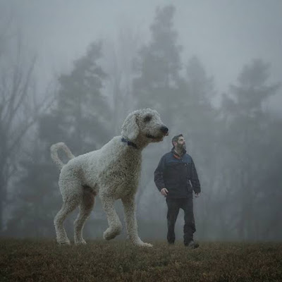 juji huge dog, is juji the dog real, 450ib dog juji, world biggest dog, largest dog in the world juji, juji real details, Juji real, juji dog image's, juji actual size, juji giant dog Photoshop, juji gaint dog breed