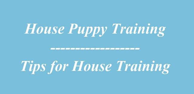 House Puppy Training