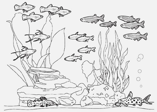 free printable tropical fish coloring pages colorings net