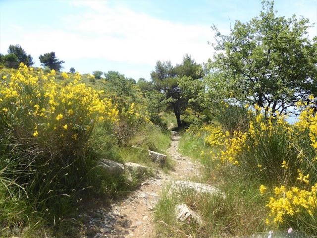 crinale Passo Chiappa Cervo