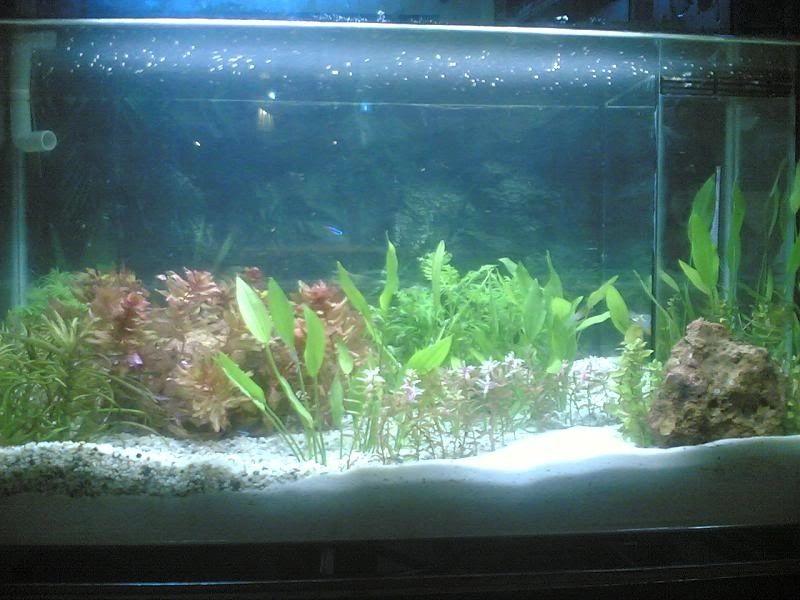 Photo Best Plants for Betta Sorority