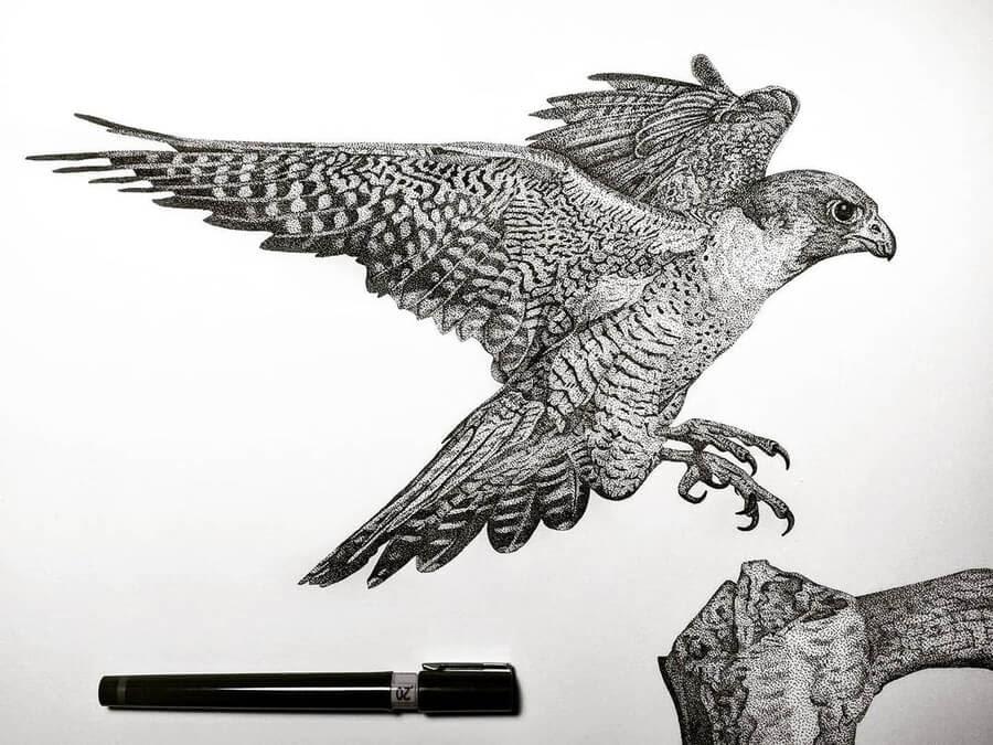 01-Falcon-Carole-Levy-www-designstack-co