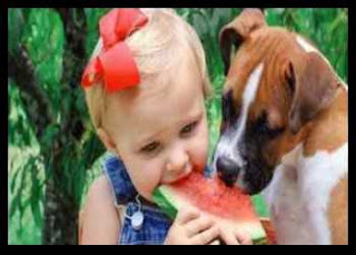 Can Dogs Eat Watermelon: Sweet Fruits For Your Dog