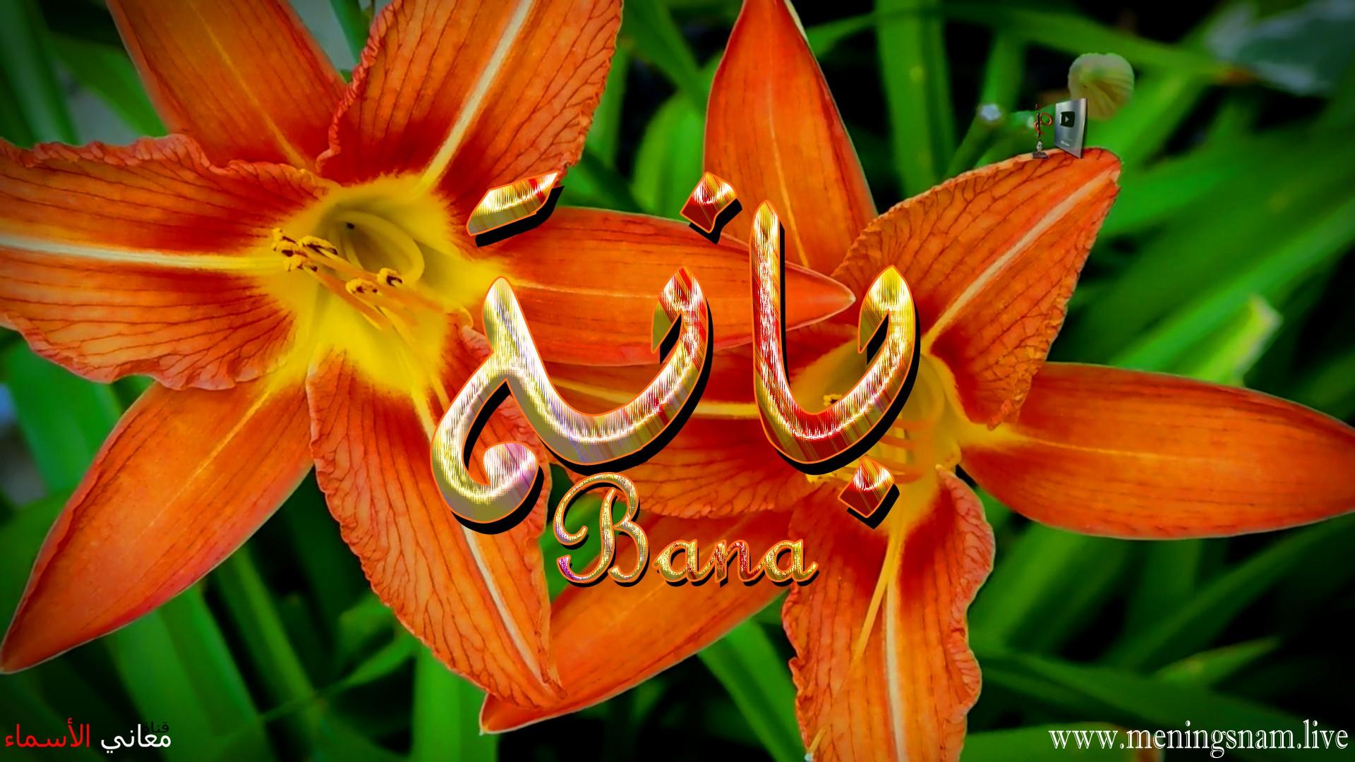 معنى اسم بانة وصفات حاملة هذا الاسم Bana