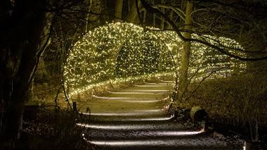 Navidad de Longwood Gardens en 15 imágenes