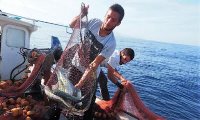 Llampuga en las excursiones de pesca turismo y turismo marinero de Mallorca y Menorca