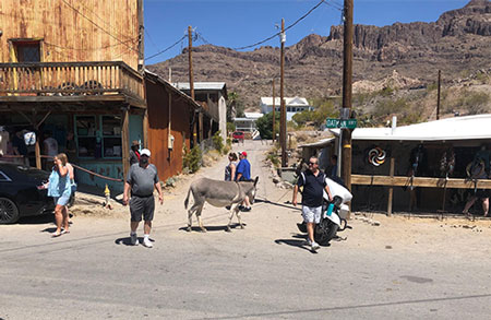 Abandoned burros and tourists in downtown Oatman, AZ (Source: Palmia Observatory)