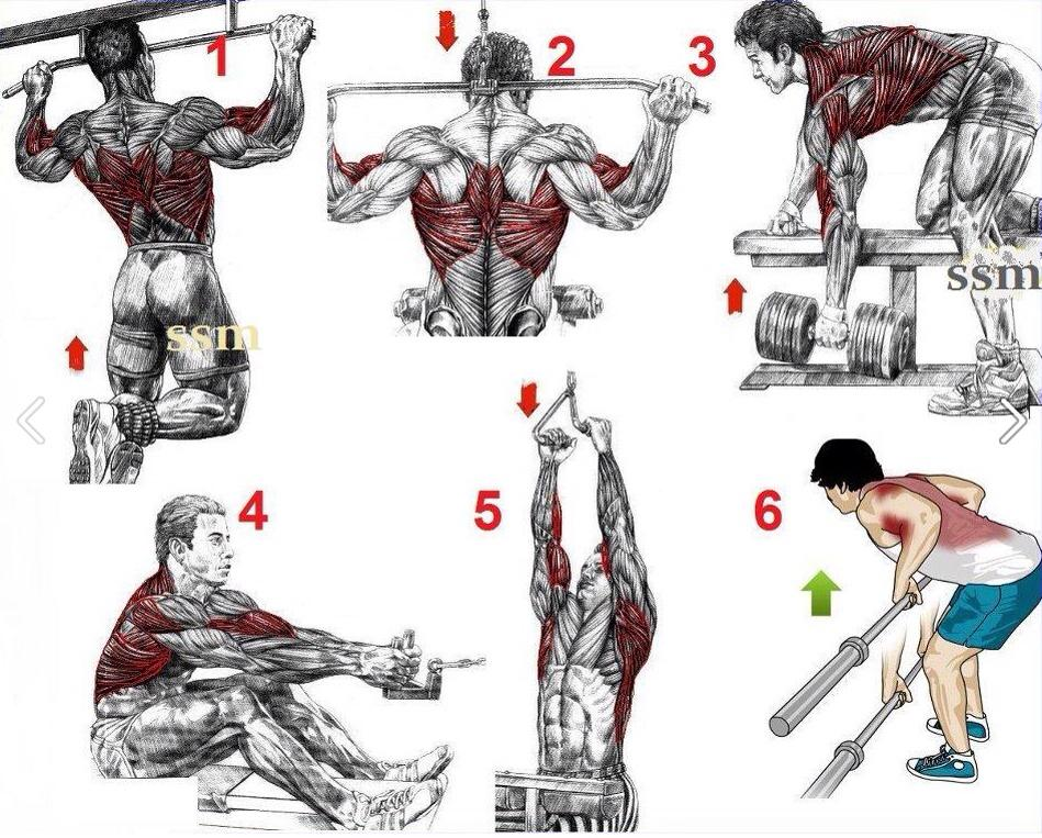 Best Back Workouts For Mass