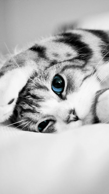 iphone cat wallpaper