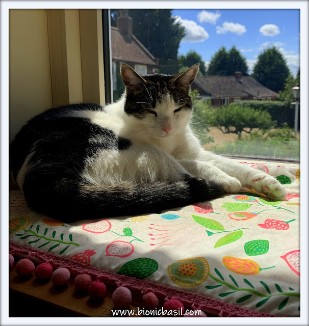Sunning with Melvyn  ©BionicBasil® The Pet Parade 364