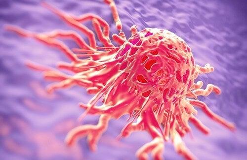 Các loại thảo dược hỗ trợ điều trị bệnh ung thư