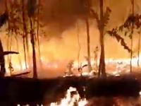 Video Kebakaran Hutan di Gunung Cihonje Sukasari Purwakarta