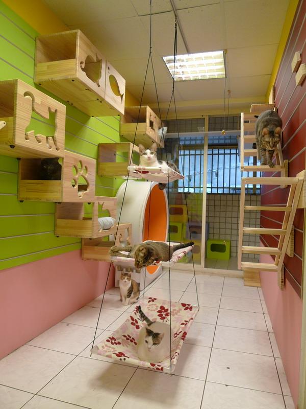 Aqui s entram gatos mammys n s queremos um quarto for House plans with pet rooms