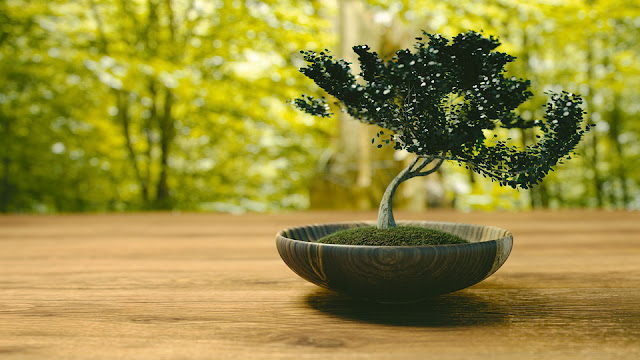 How To Grow Bonsai Trees For Beginners