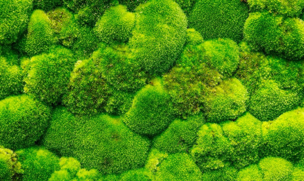 Clatsop County Master Gardeners Association Ask An Expert Is