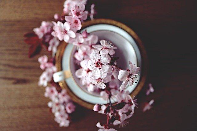 Cherry Blossom in a Home Garden