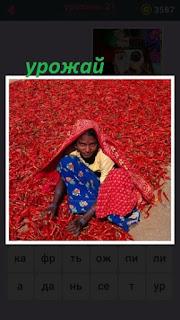 сидит женщина и вокруг неё большой урожай красного перца