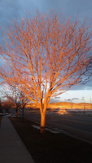 For the Mom Whose Life Feels Small~ Lately, I feel like the tree in this picture--frozen in place and stripped down to bare branches, while everything in the distance sparkles with wonder.  As a girl who wanted to go into missions and rarely dated, I tried to prepare myself for the fact that I might never get married.  As a result, I never dreamed I would be a stay-at-home-mom.