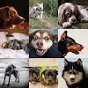 12 Rarest Dog Breeds In The World