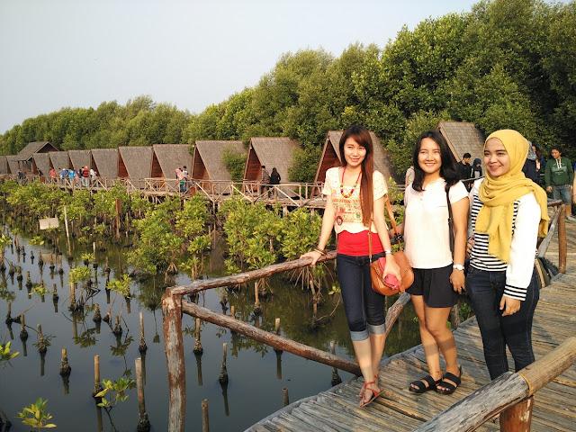 wisata hutan mangrove pik