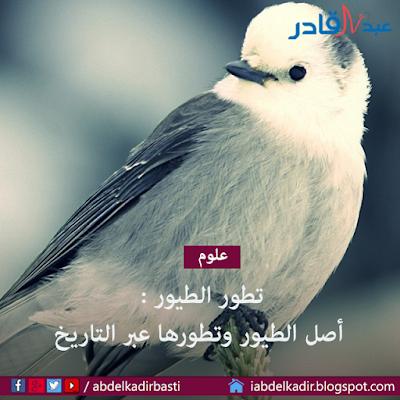 تطور الطيور