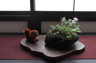 山野草のノギクとホソバタムラソウの寄せ植え