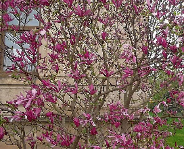 Frühlingssträucher