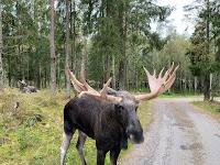 Schweden hat Elche - Overlanding und Offroadtour im 4x4