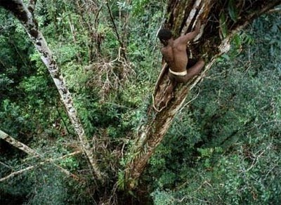 Suku Korowai Punya Rumah Pohon Paling Tinggi di Dunia