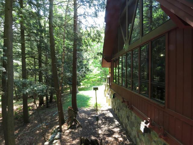 Hartwick Pines, Michigan, USA