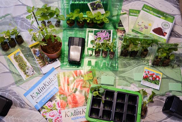 Kodin kukat kevät 2018 taimet
