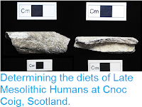 http://sciencythoughts.blogspot.com/2016/08/determining-diets-of-late-mesolithic.html