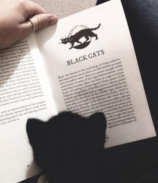 cb 6 - 10 Gatos pretos lendo livros