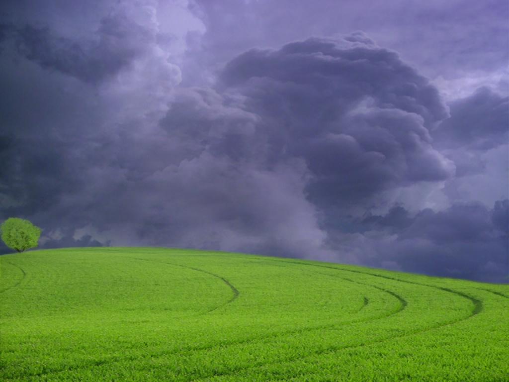 Wallpaper: Beauty of Rain