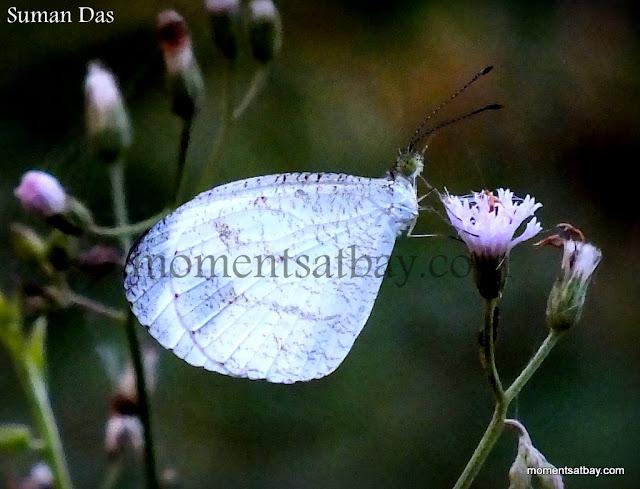 Fairy's Wings momentsatbay