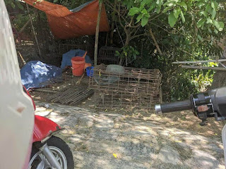 cage for stolen cats and dogs in Vietnam