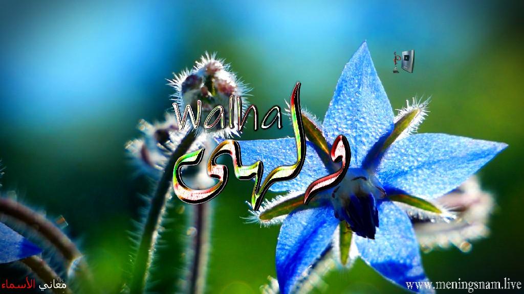 معنى اسم ولهى وصفات حاملة هذا الاسم Walha