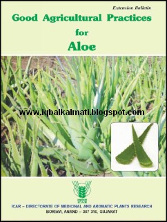 Aloe Vera Plant Information Uses And Cultivation Methods