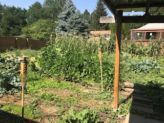 Urban farm overview showing everything growing taller still