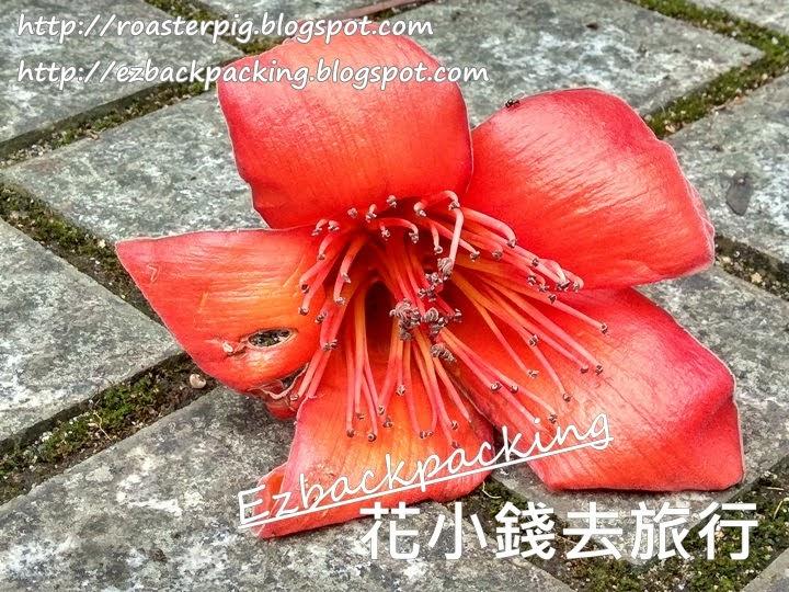 香港木棉2021