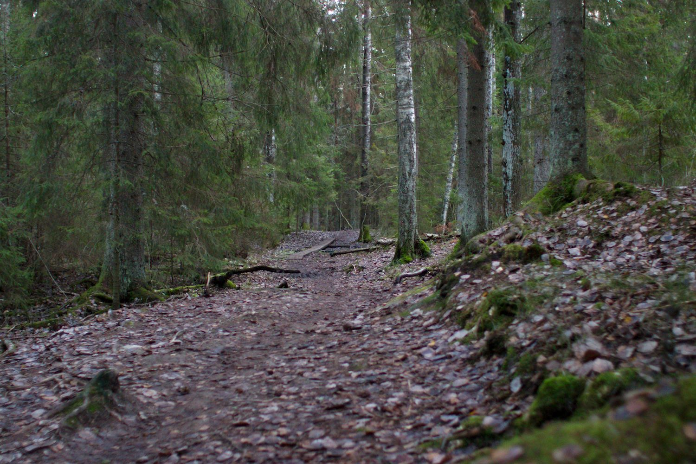 syksyinen metsä ruskean ja vihreän sävyissä