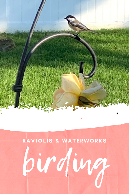 how to attract birds to your backyard that really works