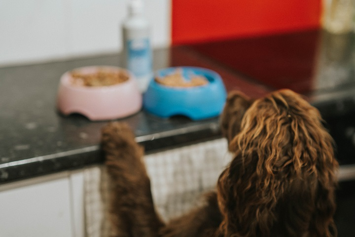 Health Benefits of Salmon Oil For Dogs