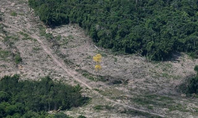 Os dados de sistema de satélites que faz o monitoramento anual do desmatamento por corte raso na Amazônia Legal, o Prodes, a serem divulgados na segunda-feira, devem apontar que a região perdeu, entre agosto de 2018 e julho deste ano, entre 9 mil e 11 mil quilômetros quadrados de mata nativa, no maior número registrado desde 2008.